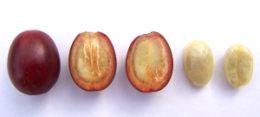 Dal frutto al chicco