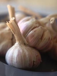 fitoterapia - aglio