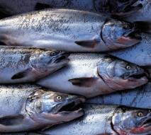 Pesce, alleato della dieta
