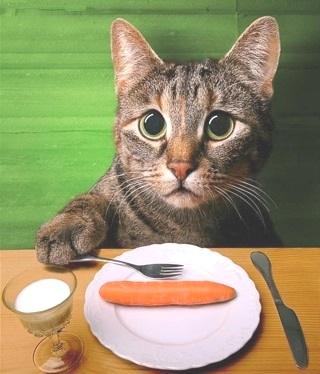 dieta Caktins per i gatti